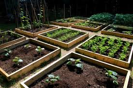 easy urban vegetable gardening tips boundless table ideas
