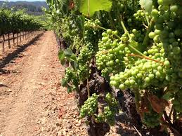 meet your grower archives winegrowers of dry creek valley