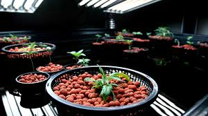 grow room lighting requirements what you need to know about grow lights