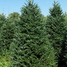 home depot fraser fir christmas tree black friday cedar grove christmas trees christmas trees 50 pompton ave