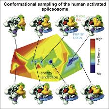 structure and conformational dynamics of the human spliceosomal bact