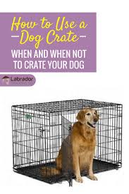 how to use a dog crate when and when not to crate a dog
