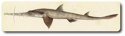 learn about the evolution of sharks of the world shark sider