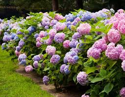 blooming plants these amazing tips will keep your plants blooming continuously and