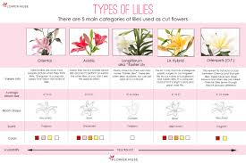 types of lilies flower muse blog