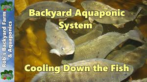 the backyard farmer video update aquaponics at the completion