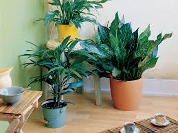 houseplants easy care indoor plants sunset