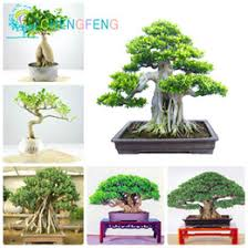 small pot trees small pot trees for sale
