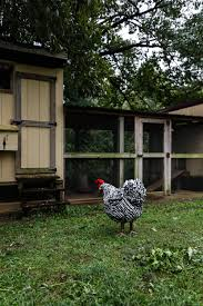 meet the city farm and her chickens u2014 folk