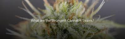 What Is An Indoor Garden Called - growing marijuana indoors vs outdoors leafly