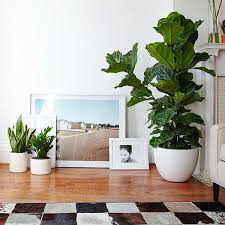 indoor plant care guide to nyc home and office plants the sill