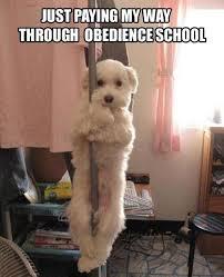 Sexy Dog Meme - white dog meme obedience paying memes comics pinterest