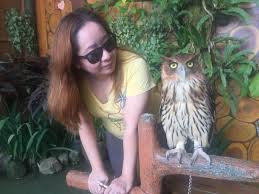 wondering if this owl can send over my application to hogwarts