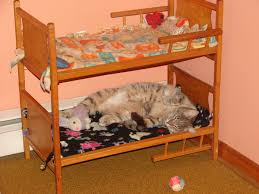 Cat Bunk Bed We Just Discovered Cat Bunk Beds Are A Thing Thank God