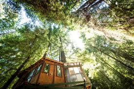the top dog friendly tree houses in the u s
