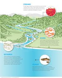 Wetland Resources Of Washington State by Salmon The Nature Conservancy In Washington