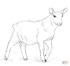 lamb coloring free printable coloring pages