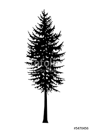 douglas fir tree douglas fir tree silhouette stock photo and royalty free images