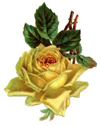 vintage yellow color vintage flower clipart yellow rose pencil and in color vintage