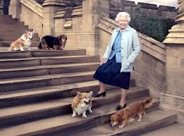 The Queens Corgis Queen U0027s Corgi Holly Used In James Bond Sketch At London Olympics