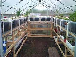 Small Backyard Greenhouse by Best 25 Aquaponics Greenhouse Ideas Only On Pinterest Diy
