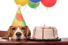 birthday stuff score free stuff on your birthday x finance