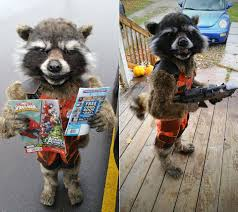 this is not rocket raccoon from guardians of the galaxy just a