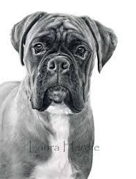 172 best boxers images on pinterest boxers dogs and boxer dogs