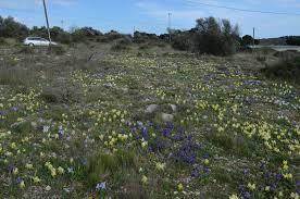 Wehr Baden Brenneter Irisgarten