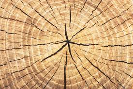 wood tree rings images Wood textured background rings tree rings stock photo picture jpg
