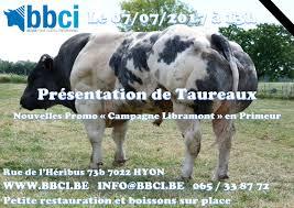 belgian blue breed blanc bleu belge belgické modrobílé plemeno