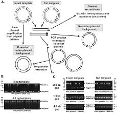 a practical comparison of ligation independent cloning techniques