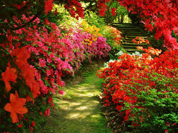 flowers gardens and landscapes beautiful home flower gardens okindoor latest flowers garden house