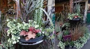 fall container garden inspiration dennis 7 dees