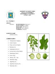 jatropha wikipedia plant material of tubang bakod horticulture and gardening plants