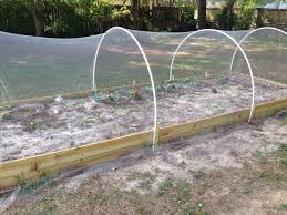 Pvc Raised Garden Bed - 8 best yard images on pinterest 3 4 beds bird netting and pvc pipes