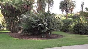 Huntington Botanical Garden by San Marino California Huntington Botanical Gardens Palm Garden
