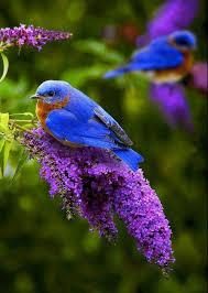 Flower And Bird - leigh richards blue bird purple flower