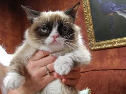 Grumpy Cat Has Died Youtube - sex death and grumpy cat the true meaning of sxsw nbc news