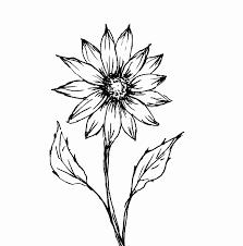 foto wallpaper bunga matahari contoh gambar sketsa bunga matahari wallpaper keren drawings art