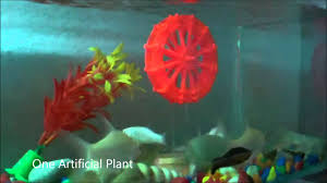 Decorative Items For Home Decorative Items For Home Aquarium Tank Youtube