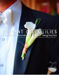 Calla Lily Flower Delivery - calla lily types of flowers garden wedding delivery wholesale