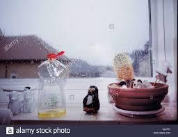 cactus window sill stock photos cactus window sill stock images