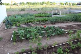 pvc drip irrigation system for your garden stoney acres