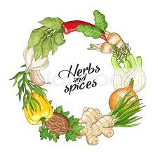 vector vegetable circle wreath template with spices and herbs