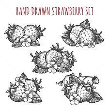 strawberry sketch icons set by vectortatu graphicriver