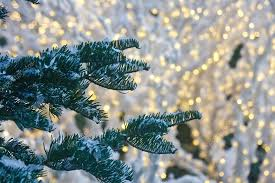 snow on fir trees with lights in background stock