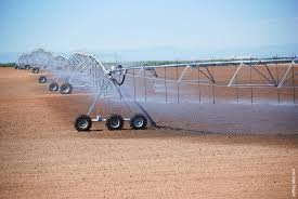 irrigated corn precision overhead irrigation is suitable for several central valley