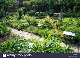 medicinal plants in queen u0027s garden kew palace kew royal botanic