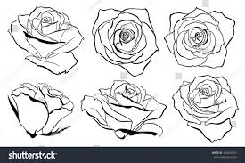 vector set detailed isolated outline rose stock vector 490609183